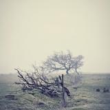 David Bracher - Misty Landscape - Poster