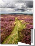 Rural Country Scene in the North of England UK Poster av Mark Sunderland