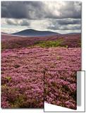 Mark Sunderland - Rural Country Scene in the North of England UK Obrazy