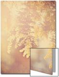 Tree in Bloom Posters av Myan Soffia