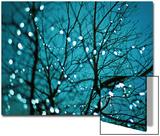 Tree at Night with Lights Posters av Myan Soffia
