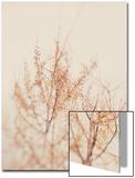 Myan Soffia - Tree in Winter Umělecké plakáty