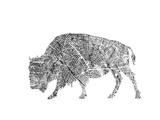 Bison Affiches par  Peach & Gold