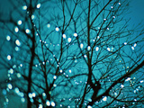 Tree at Night with Lights Prints by Myan Soffia