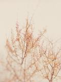 Tree in Winter Posters by Myan Soffia