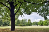 Tree in a Park in Germany Photographic Print by Felipe Rodriguez