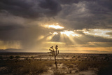 Sunlight on Desert Landscape in USA Wall Mural by Jody Miller