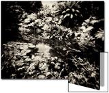 Tim Kahane - The Lost Gardens of Heligan Umělecké plakáty