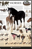 Horses Dorling Kindersley Educational Poster Print Stretched Canvas Print