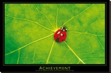 Ladybug (Achievement) Art Poster Print Stretched Canvas Print