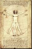 Vitruvian Man, c. 1492 Stretched Canvas Print by  Leonardo da Vinci