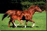 Mare & Foal - Şasili Gerilmiş Tuvale Reprodüksiyon
