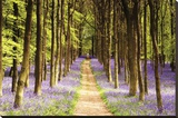 Woodland Path Stretched Canvas Print