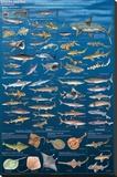 Sharks And Kin Stampa su tela