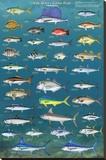 Salt Water Game Fish Stampa su tela