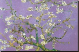 Vincent Van Gogh Almond Blossoms Lavender Art Print Poster Stretched Canvas Print