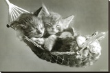 Kittens In A Hammock Stretched Canvas Print by Keith Kimberlin