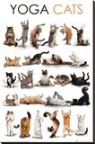 YOGA CATS Lærredstryk på blindramme