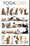 YOGA CATS - Şasili Gerilmiş Tuvale Reprodüksiyon