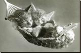 Gatitos en hamaca Reproducción en lienzo de la lámina por Keith Kimberlin