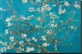 Amendoeiras em flor, San Remy, 1890 Impressão em tela esticada por Vincent van Gogh