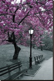 Central Park-Blossom Stretched Canvas Print