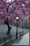 New York Central Park Blossom Photograph Poster Stretched Canvas Print