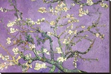 Purple Almond Blossoms Stretched Canvas Print by Vincent van Gogh