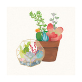 Succulent Garden III Prints by Wild Apple Portfolio