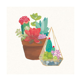Succulent Garden IV Posters by Wild Apple Portfolio