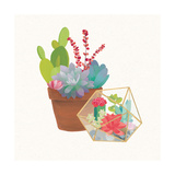 Succulent Garden II Art by Wild Apple Portfolio