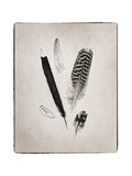Feather Group II BW Kunstdrucke von Debra Van Swearingen