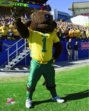 North Dakota State Bison Mascot Photo