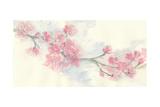 Cherry Blossom II Prints by Chris Paschke