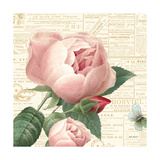 Roses in Paris V Plakat av Katie Pertiet