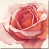 Roses Are Pink I Lærredstryk på blindramme af Yvonne Poelstra-Holzhaus