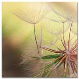 Dandelion Harmony Kunst