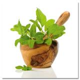 Green Kitchen Herbs Poster