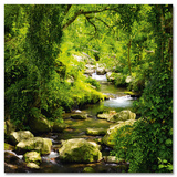 Silent River Flowing Plakater