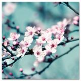 Closeup Blossom I - Reprodüksiyon
