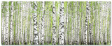 Birch Grove I Posters