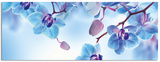Blue Orchids - Poster