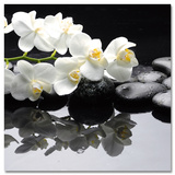Calming Orchid Branch Poster