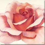 Roses Are Pink II Lærredstryk på blindramme af Yvonne Poelstra-Holzhaus