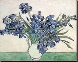 Iris Sträckt kanvastryck av Vincent van Gogh