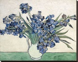 Irises Stretched Canvas Print by Vincent van Gogh
