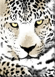 Jaguar Stretched Canvas Print