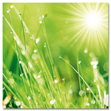 Lush Morning Grass Plakat