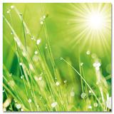 Lush Morning Grass Poster