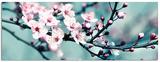 Closeup Blossom III Poster